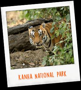 Kanha National Park India